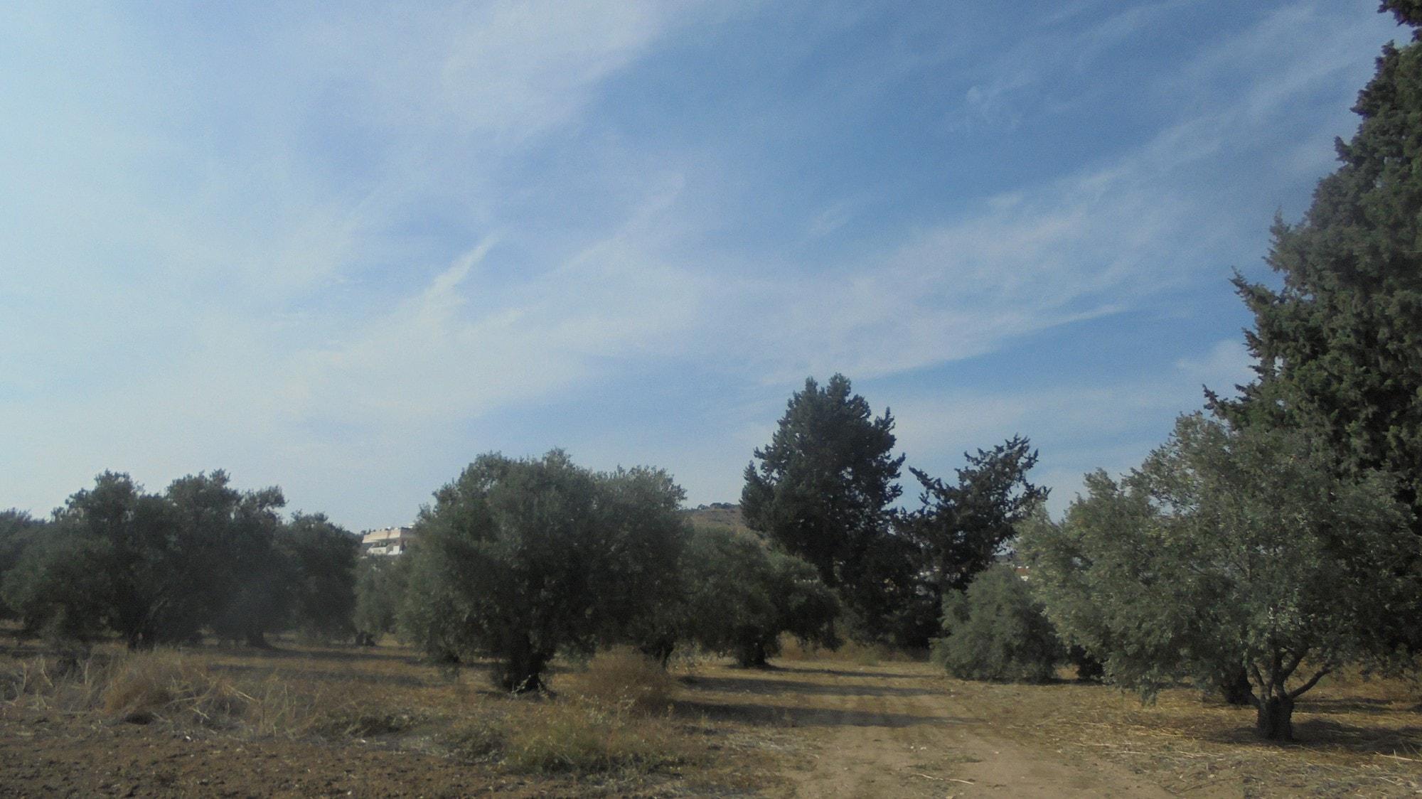 Plot in Oroklini