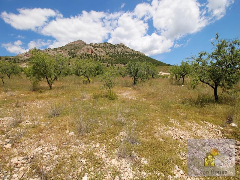 Land for sale Zarzadilla De Totana