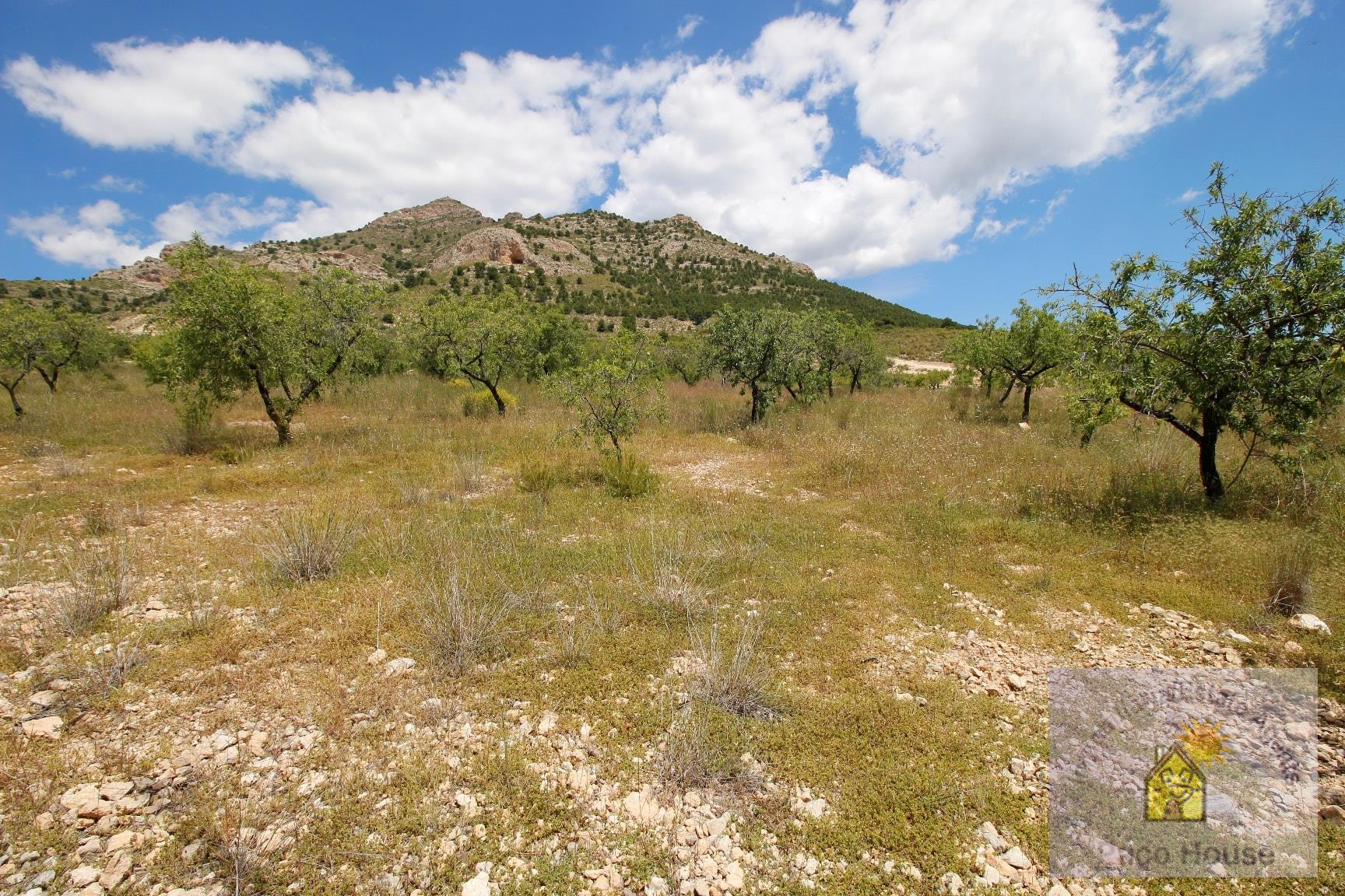 Land for sale Zarzadilla De Totana